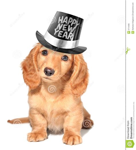 puppy years new year s puppy royalty free stock image image 3714406