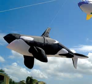 whale laundry kite accessories images gallery