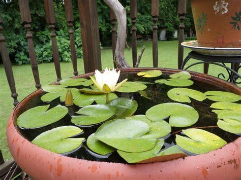 giardino terrazzo fai da te giardino acquatico in giardino o terrazzo realizzare un