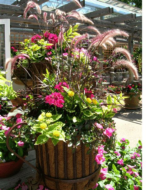 Flowers For Planters Sun by Containers Recipes For Sun Containers Sun Loving Plants
