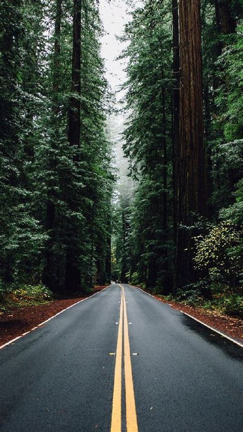 wallpaper for tall walls green forest road tall trees iphone 5 wallpaper iphone