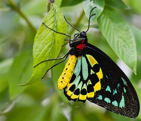 imagenes de mariposas posadas en flores im 225 genes hd de mariposas im 225 genes y fotos