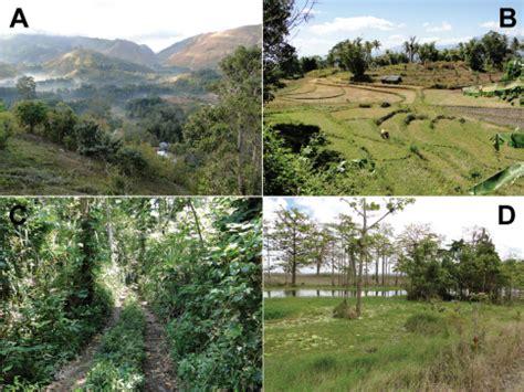 exle of habitat exles of sled habitats in timor leste a highland open i