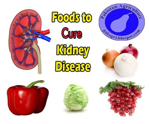 Food For Kidney Detox by 7 Best Hygiene 101 Images On Dental Health