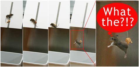 maus fangen maus fangen emok tv