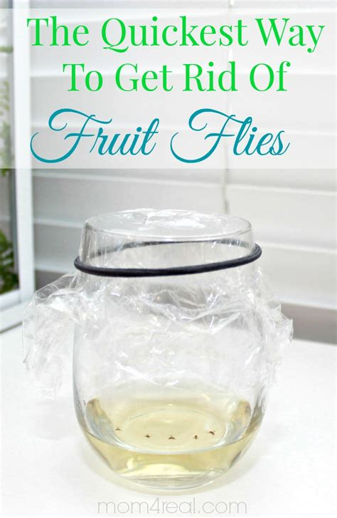 how to get rid of gnats in the house fast how to get rid of fruit flies or gnats tip of the day mom 4 real