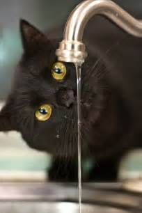 cat water faucet 17 cool pictures of cats from water faucets