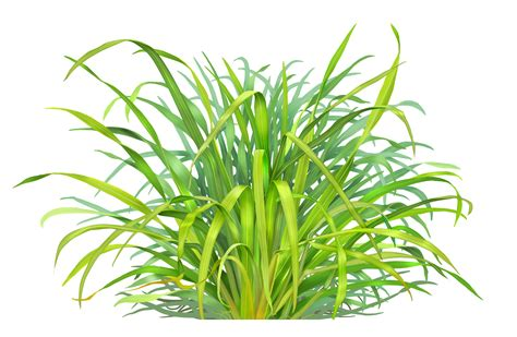 paul mirocha design and illustration lemongrass c1 1