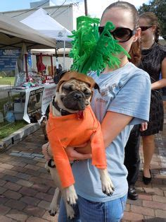 can pugs eat carrots chico on pugs pug costume and go outside