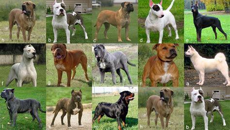 ley de razas de perros peligrosos boo the dogs los alcances de la ley que regula la tenencia de perros