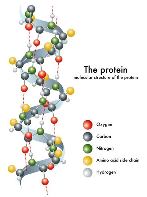 protein molecular structure does a whole food plant based diet enough protein