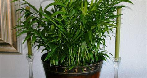 pianta per interni piante per interni piante appartamento piante da interno