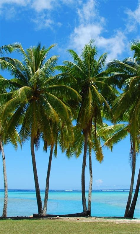 tumblr palm tree backgrounds picture gallery desktop background