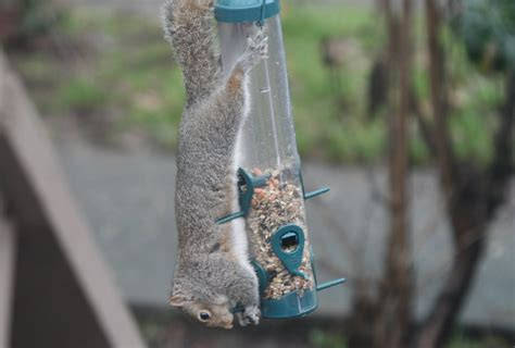 bird feeder that spins squirrels home improvement
