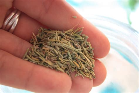 Stimulants Herbs That Give drink this diy rosemary tonic to stimulate your liver