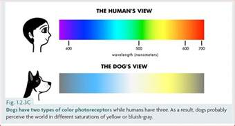 how do dogs see color