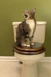 why your cat is obsessed with you on the toilet catster