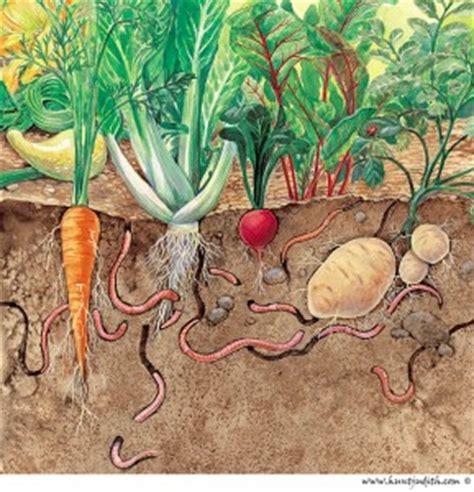 Earthworms The Unseen Workers Of Vegetable Garden Soil Worms In Vegetable Garden