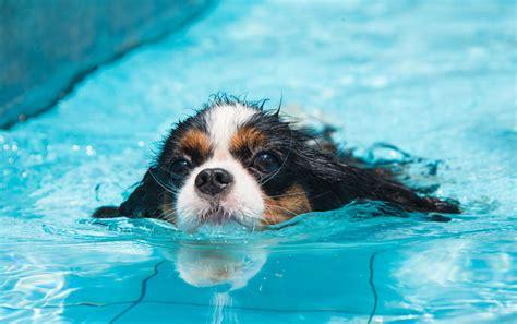 hydrotherapy for dogs hydrotherapy for dogs