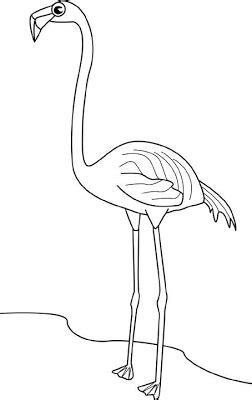 flamingos coloring pages  kids