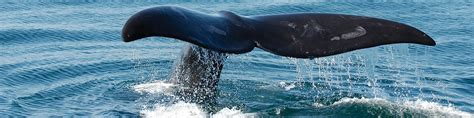 Hiasan Aquarium Orca Seal whale new aquarium