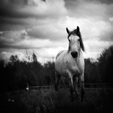 imagenes a blanco y negro de caballos 15 fotos en blanco y negro taringa