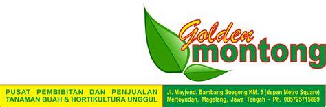 Cari Bibit Mangga Arumanis golden montong