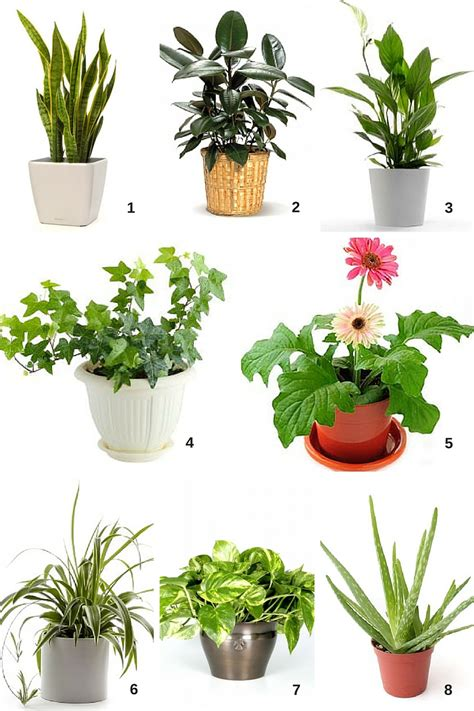 mini house plants spring cleaning air filtering houseplants cubesmart