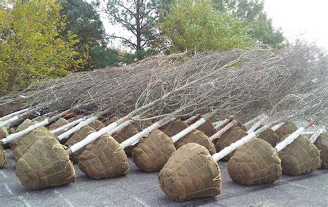 Wholesale Trees - mid atlantic wholesale nursery jbyrd nurseries llc