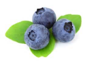 what color are blueberries colors blue blueberry