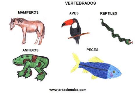 imagenes de animales vertebrados mamiferos animales vertebrados que son clasificaci 243 n tipos y