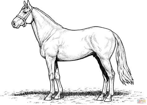 coloring pages of real horses draft horse coloring pages realistic coloring pages