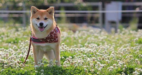 perros para vivir en un piso razas de perros que no deben vivir en un piso bekia mascotas