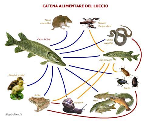 catena alimentare definizione chiana ecosistema lago