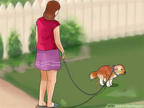 what to feed a 2 month puppy how to feed puppies 15 steps with pictures wikihow
