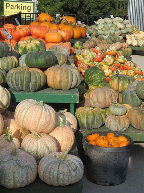 finally it s time decorate your home for christmas pumpkinpalooza it s time to decorate your home for fall