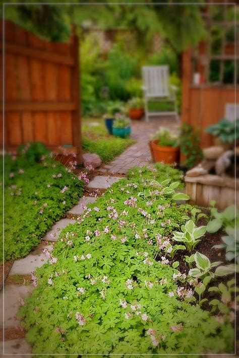 difficult plants to grow 17 best images about gardening on pinterest gardens