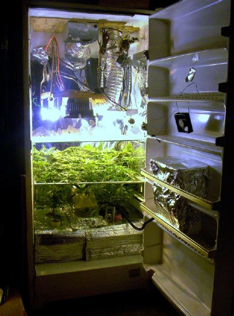 small grow room small indoor marijuana grow box pictures to pin on pinsdaddy