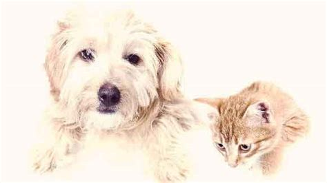 how much to get a spayed how much should spaying a pet cost petcarerx