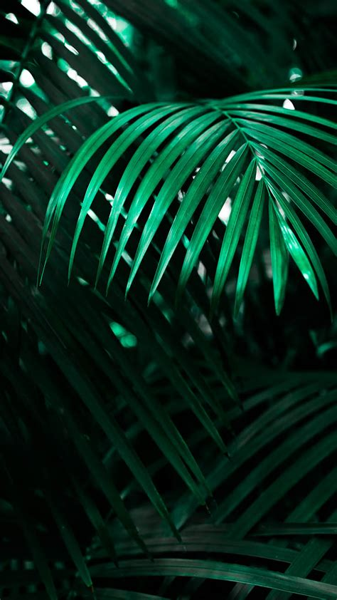 jungle iphone xs max wallpapers preppy wallpapers