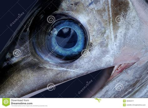 L Eye Fish by Sword Fish Eye Stock Image Image Of Fish Leisure Nature
