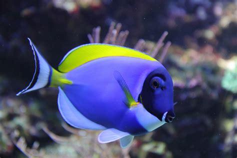 Aquarium Fish L by Saltwater Aquarium Fish Connie S Tropical Fish Is Changing