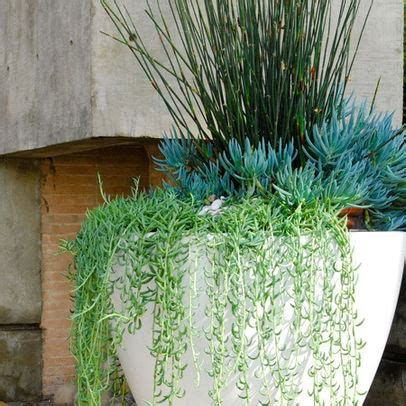plants that drape pin by erin whaley on grow it pinterest