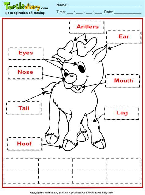 reindeer printables kindergarten label reindeer worksheet turtle diary
