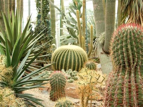 succulents plants adaptations for kids 25 best ideas about desert biome plants on pinterest