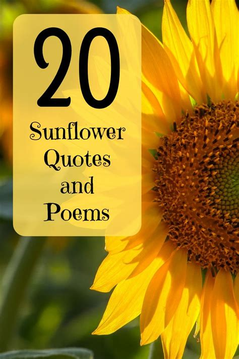 happiest sunflower quotes poems  sayings