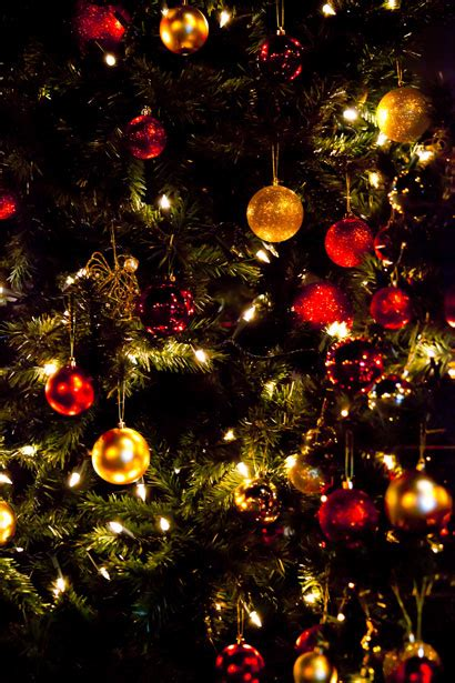 christmas tree wallpaper  stock photo public domain pictures