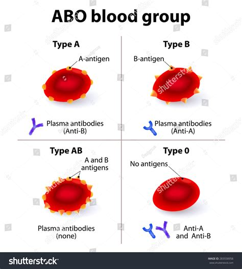 abo blood groups there four basic stock illustration 283558958