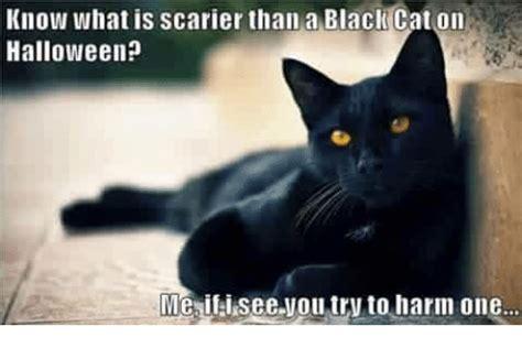 Halloween Cat Meme - 25 best memes about cats cats memes