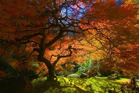 beautiful tree the 18 most beautiful trees in the world